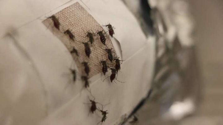 zashtita-komari